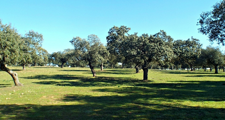 Mérida day trip for nature lovers: Parque Natural de Cornalvo
