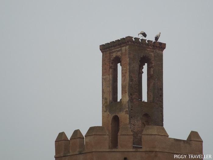 Storks - Badajoz, Extremadura