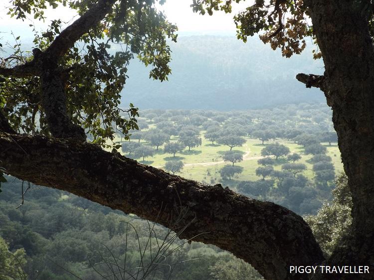 Dehesa - Monfrague National Park, Extremadura