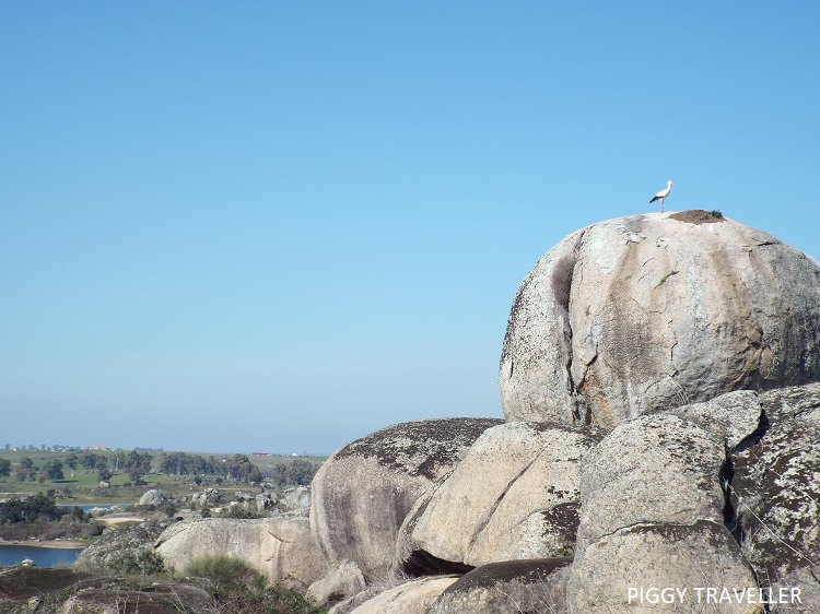 stork and rock, los barruecos, extremadura