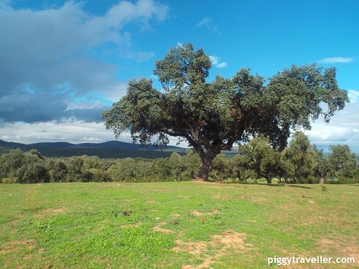 Dehesa in Extremadura