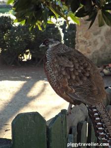 bird, parque de los pinos