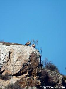 vultures, Alcantara quarry