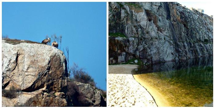 vultures, quarry