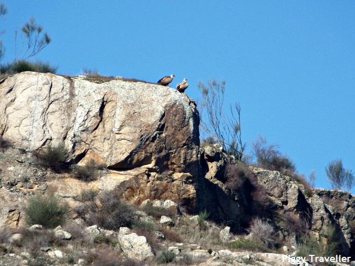 Vultures, Alcántara