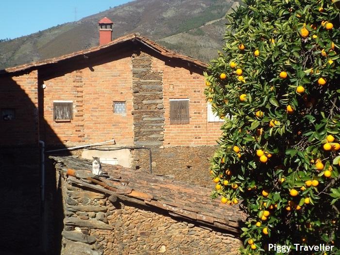 Cat in the sun in Robledillo de Gata