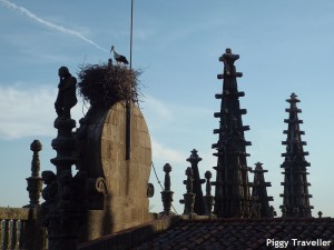 Plasencia cathedral. Stork.