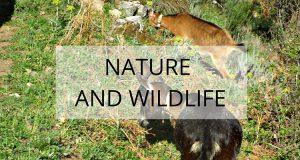 extremadura nature and wildlife