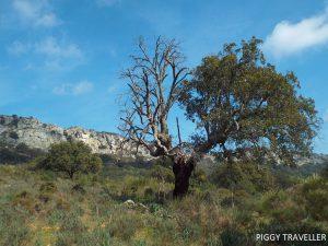 Tree - Monfrague National Park, Extremadura