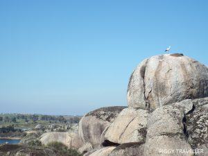 stork and rock, los barruecos, extremadura