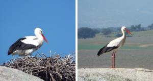 storks, los barruecos, extremadura
