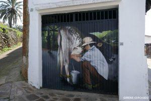 milking the cow_Romangordo, Extremadura