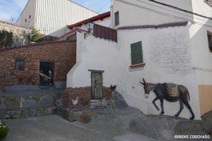 the donkey corner_Romangordo, Extremadura